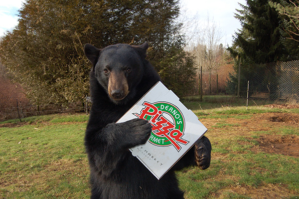 Bear loving our pizza